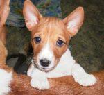 Стишок про задиристого щенка – Потешки про щенка